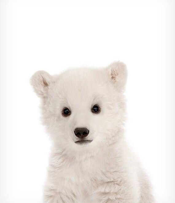 Baby polar bear print Zoo animal nursery The Crown Prints