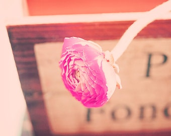 Sunny Side Up - 8x10 photograph - fine art print - red ranunculus - gifts for women - nursery art - sweet little flower