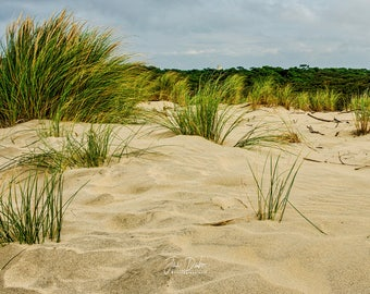 Herbes Folles the beaches of the island of Ré - Charente-Maritime