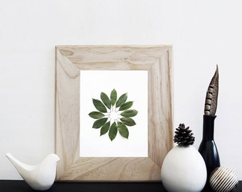 Leaves Circle. 8x10. Fine Art Photographic Natural History Print. Minimalist. Natural Home Decor. Indoor garden botanical.