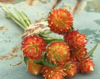 Orange Gomphrena Seed, Globe Amaranth, Gomphrena haageana Seeds, Orange Flowers Great for Dried Flowers and Fall Decor, Easy to Grow Seeds