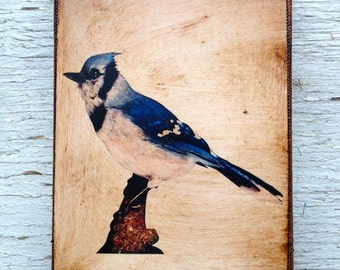 Vintage Blue Jay Bird  Specimen 1904 -  Small Wall Art