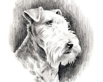 LAKELAND TERRIER Dog Pencil Drawing Art Print Signed by Artist DJ Rogers