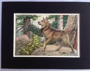 NORWEGIAN ELKHOUND DOG Louis Agassiz Fuertes Vintage Mounted 1919 plate print Congratulations Christmas Birthday gift