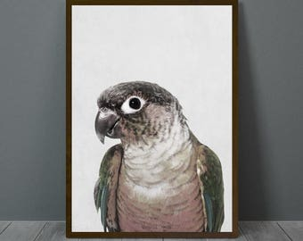 Parrot, Parrot Wall Decor, Parrot Poster, Animal Print Wall Decor, Parrot Digital Print, Parrot Nursery Print, Parrot Nursery Wall Art