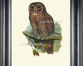 Owl Print Wall Art 4 Beautiful Antique Large Bird Green Tree Leaf Branch Forest Nature Illustration Natural Science Home Wall Room Decor  JG