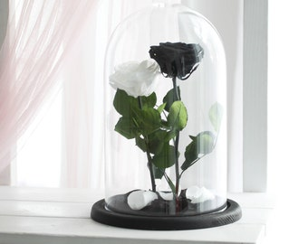Two Beauty and the beast roses (Large), Forever white rose, black rose, Enchanted Rose, Belle rose in glass, preserved rose, eternal rose