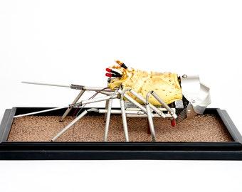 Robotic Sculpture, Recycled Marine Life