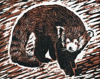 Red Panda - Original Woodcut Print