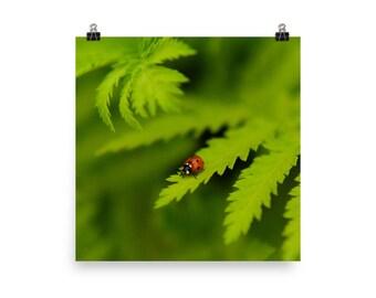 green leaves print   ladybug photo   wall art   nature photography