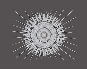 Circles Round The Sun - 11 x 14 inch Cut Paper Art Print