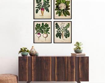Vegetable Botanical Print Set, Botanical Four Print Set Home Decor, Four Veggie Botanicals, Art Reproduction, Root Vegetables Print Set m012