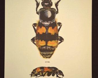 Bug Print Beetle Wall Decor Art Insect Nature Vintage