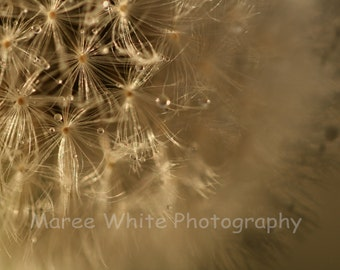 Golden dandelion, Macro photography, Fine Art print, Ready to frame, Wall print, Home decor, Nature