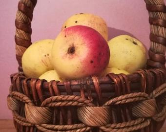 Apple, apple basket, instant download, printable