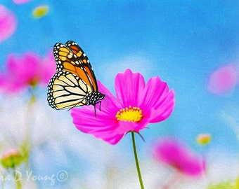 Flower Art Print, Pink Cosmos Flower, Monarch Butterfly, Summer Flower, Orange and Pink, Nature Art Print, Mothers Day, Fine Art Photography