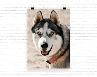 Siberian Husky Husky Art Dog Photo Pet Portrait Dog Portrait Pet Photography Dog Photography Instant Download Printable Art Dog Lover Gift