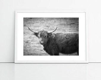 Yak Photography, Black And White Animal Photo, Art Print Photography Printable Art, Office Art
