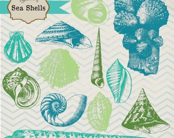 50% OFF SALE! Seashells, digital clip art and photoshop brushes: Instant Download
