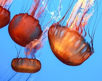 Jellyfish Fine Art Print, Jellyfish Photo, Jelly Fish Print, Coastal Wall Decor, Ocean Decor, Ocean Art Print, Nursery Art, Jellyfish Art