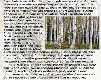 BIRCH MAGIC Properties, BOS Instant Download Page, WaND, Bark Scrolls, Book of Secrets, Glamerie Pages