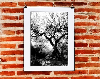 Black and White Tree Photography Download, Printable Tree Wall Art, Nature Photography, Tree Wall Decor, Printable Black and White Print