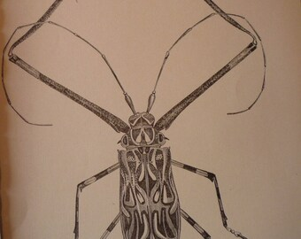 Long armed Beetle - 1888 etching - Natural world framable - for insect lover - garden room - mat option for 8 by 10 frame