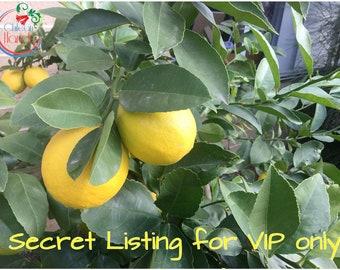 Secret Listing for VIP only!