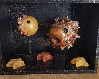 Pufferfish showcase