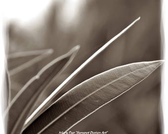 Wall Art,leaves, gray tones, Sepia photography, Sepia toned print, Nature print, Plant pfotograph, Botanical Art, Wild Flowers
