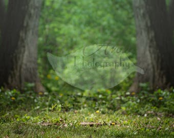 Light in the Woods Digital Photography Backdrop Background