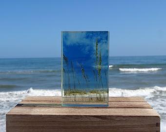 Sea Oats in Glass