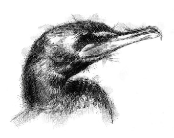 Cormorant sketch | Limited edition fine art print from original drawing. Free shipping.