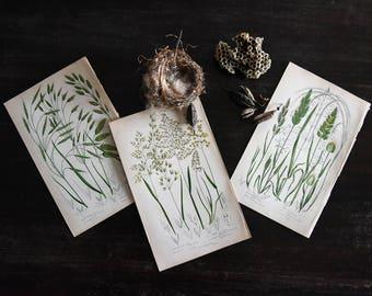 Botanical Prints, Antique Prints, Antique Book Plates, 19th Century Prints, Meadow Grasses, Vintage Prints, Wall Art, Botanical Prints