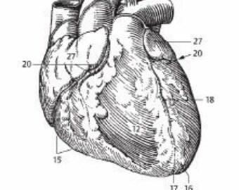 Anatomical Heart  Illustration Rubber Stamp