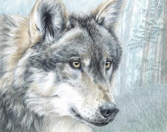 Wolf Art INTENT EYES print by Carla Kurt Signed 11 x 14, top selling artist, best selling