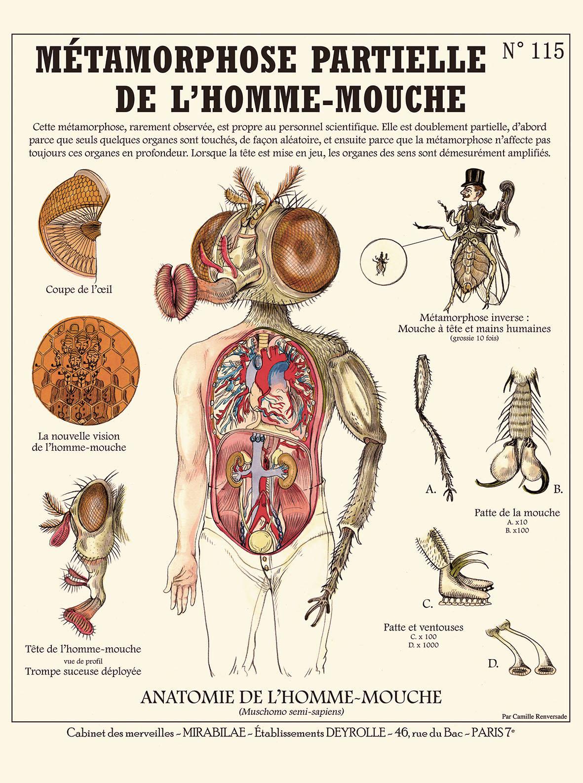 Nett Was Ist Inversion In Der Anatomie Fotos - Menschliche Anatomie ...