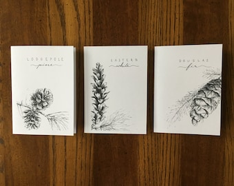 Set of 6 Blank Note Cards - Pen & Ink Sketches of Pine Cones