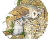 Barn Owl & Owlet // Squar...