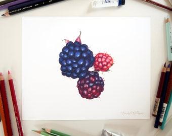 Blackberries Illustration // 8x10 Realistic Food Art