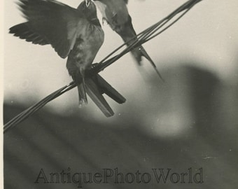 Kissing birds on wire vintage art photo by Soviet photographer Vladimir Gailis