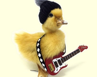Taxidermy Duckling, Rockstar, duck, Guitar, oddity, Goth, Musician,  Gift, musical duck, Dead, curiosities, weird gift, Rock band, funny