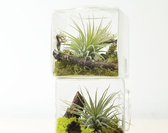 Miniature Geometric Air Plant Terrarium// Glass Cube// Home Decor// Green Gift// Tabletop Terrarium// Hostess Gift