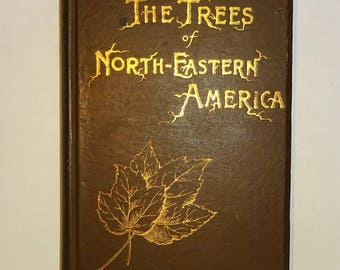 1893 The TREES Of NORTHEASTERN AMERICA by Charles Newhall, Illustrated, Dendrology Botany