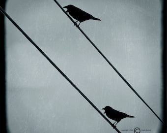 Blue Sky Birds Wires Photograph--Two Birds on Two Wires--TTV Fine Art
