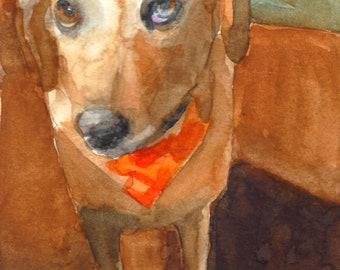 Custom Pet Portraits,