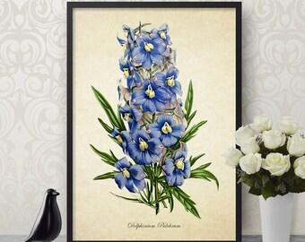 Botanical Print, Delphinium Print, Flower Print, Delphinium Botanical Print, Blue Flower Art Print, Decorative Botanical Reproduction FL077