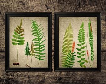 Vintage Fern print, Kitchen decor, vintage botanical wall art, fern decor, printable art