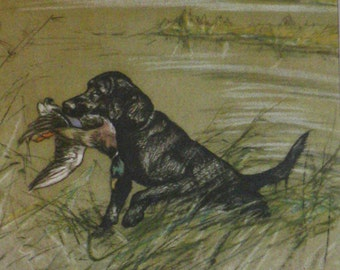 1947 LABRADOR Vintage signed original Vernon Stokes mounted dog bookplate print Unique gift