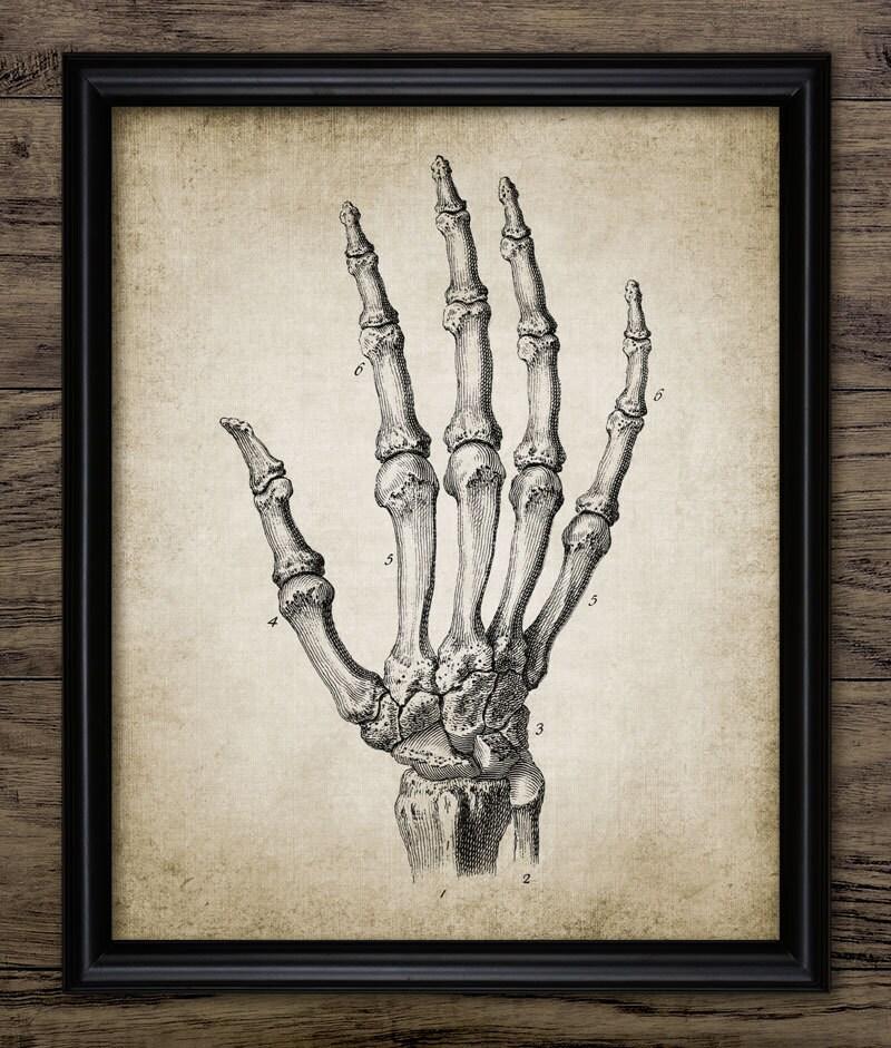 Hand Anatomie Print Anatomie Vintage menschliche Hand